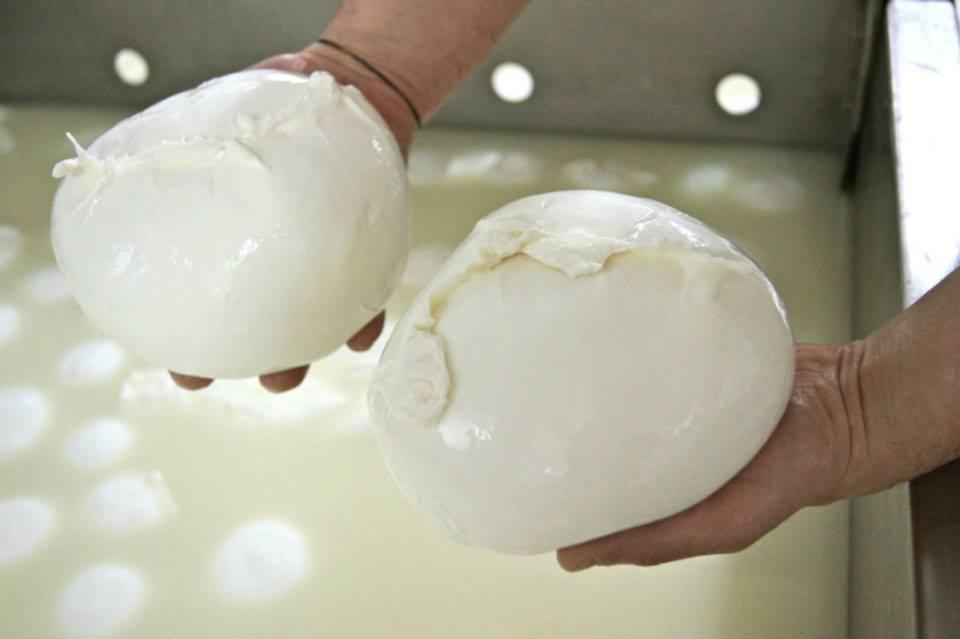 Mozzarelle di Battipaglia - Mozzarella finita